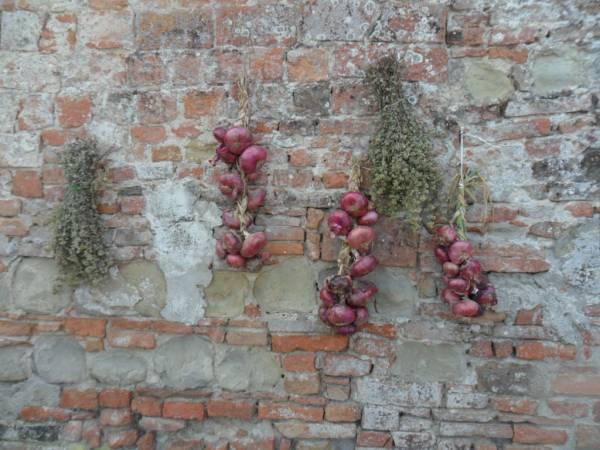 Cipolle ad asciugare sul Torrione